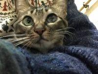 CAT_CinCin