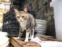 CAT_FatJai